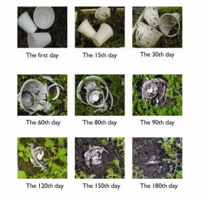 500 Biodegradable Communion Cups
